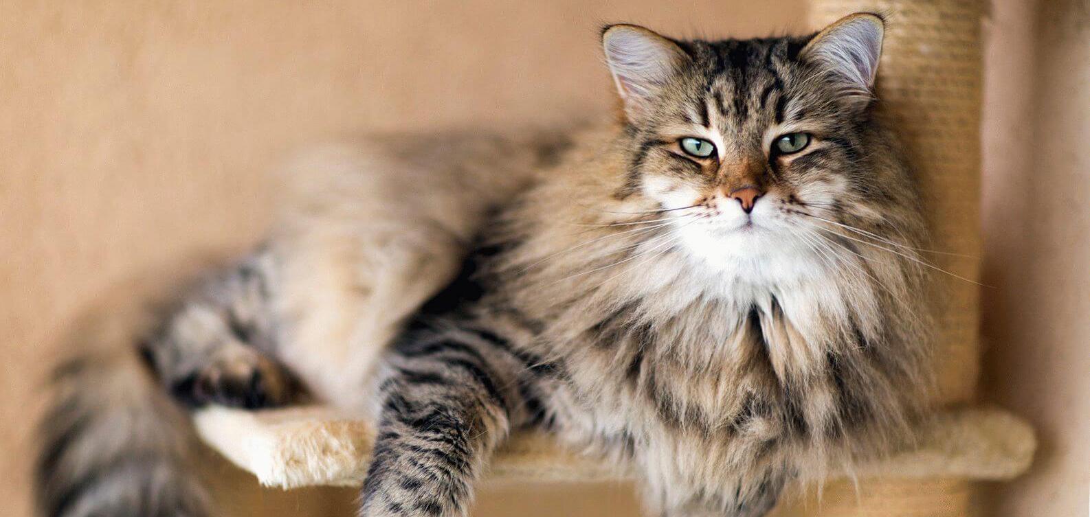 Условия трансфера для кошек