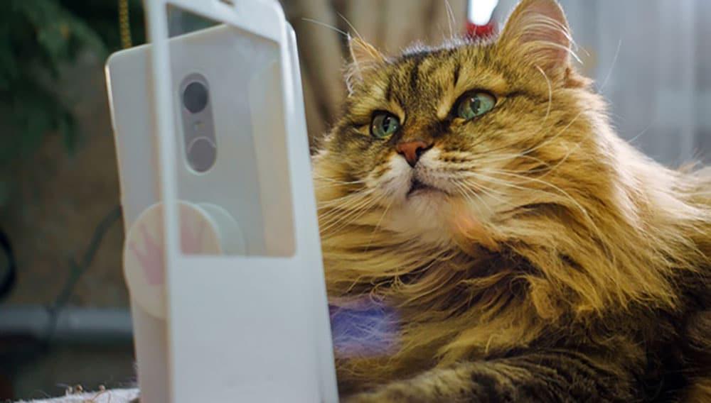 Забронировать гостиницу для кошек в Москве и Санкт-Петербурге