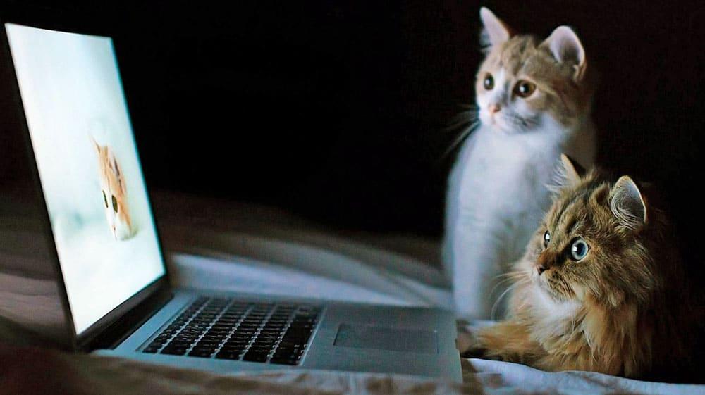 Сайт передержки животных в Москве и СПб