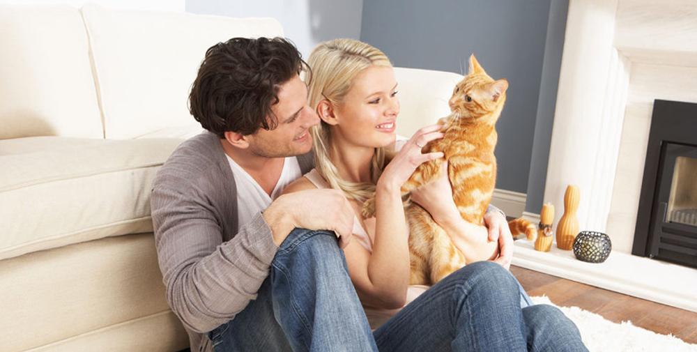 От чего зависит стоимость передержки кота
