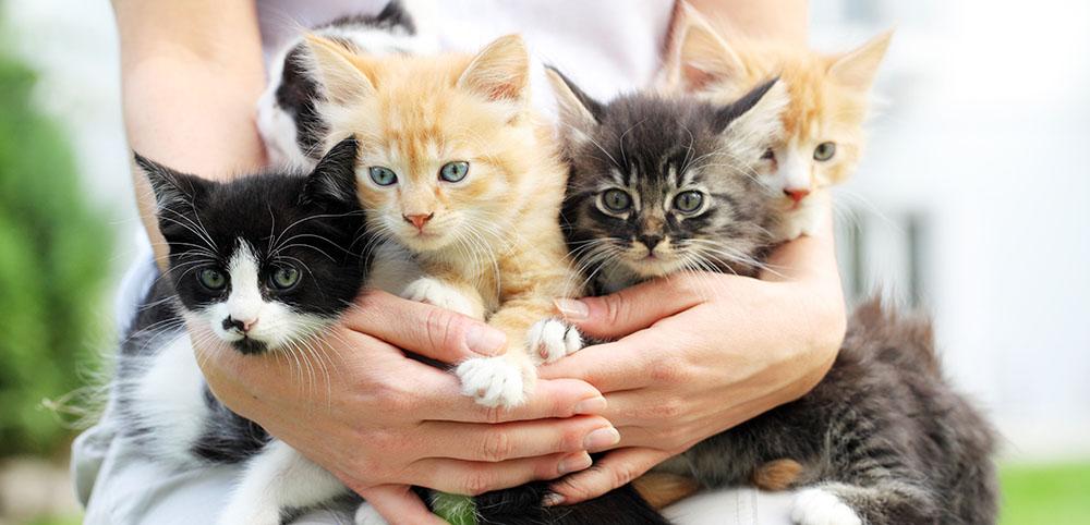 Общие выводы по выбору условий передержки кошек