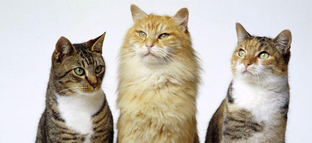 Большое разнообразие услуг по передержке кошек