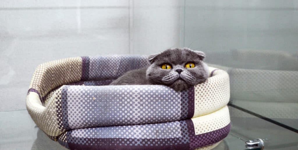 Платная передержка кошек
