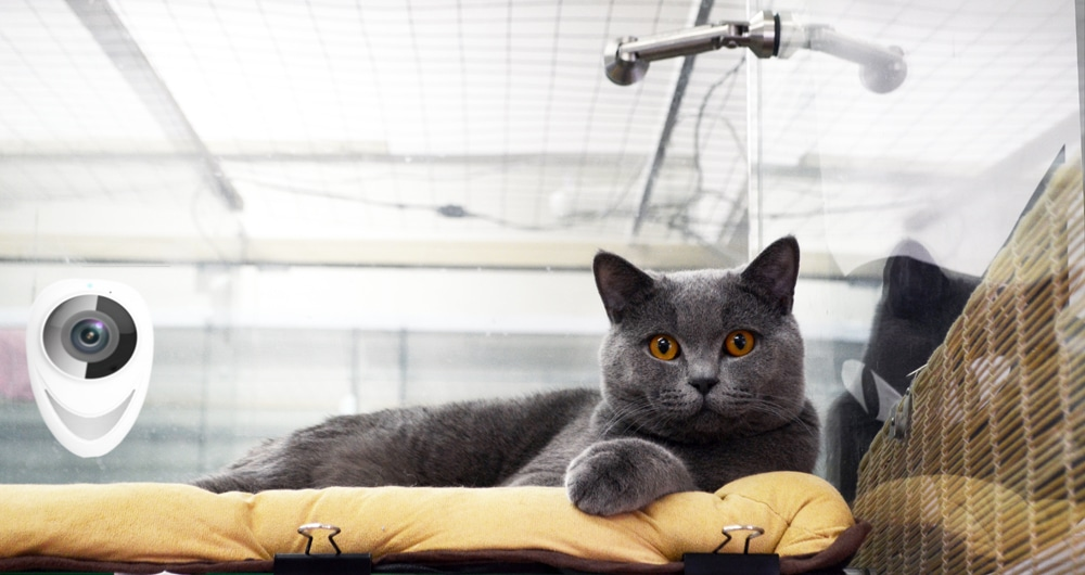 Отель для кошек с видеонаблюдением