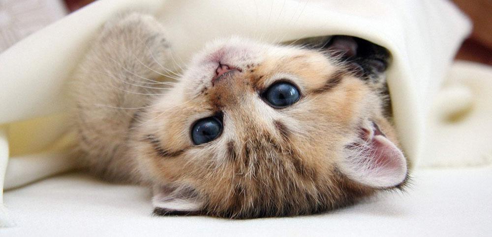 Преимущества и недостатки передержки кошек в СПб на дому