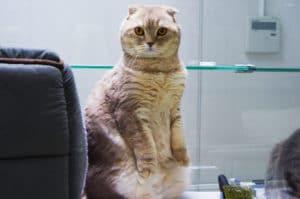 Сдать кота на передержку в Москве