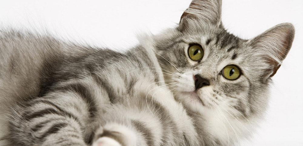 Преимущества обращения в центр передержки животных в СПб