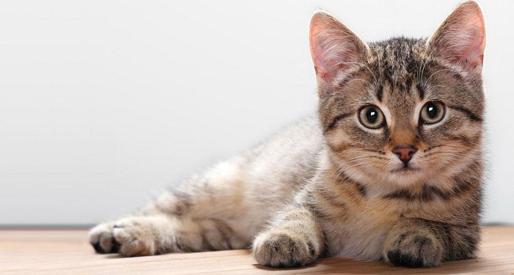 Из чего состоит цена на передержку котов