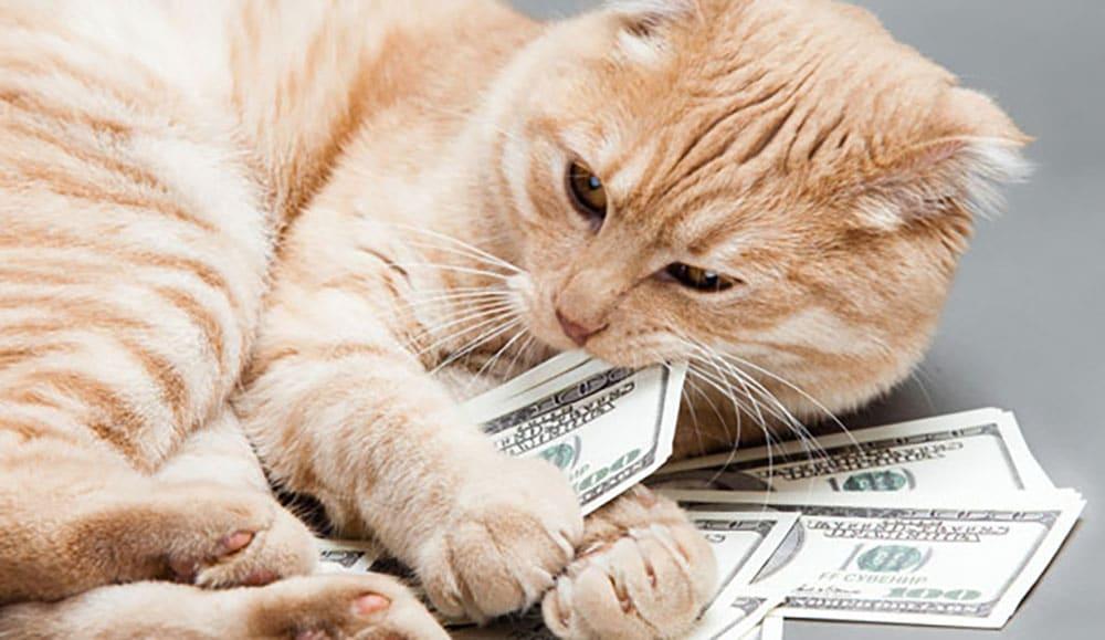 Цены на передержку кота в Москве и СПб