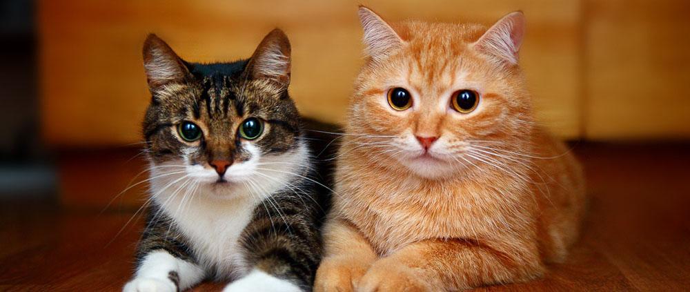 Перечень услуг по передержке домашних животных