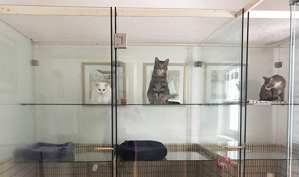 Временная гостиница для кошек в Москве и СПб