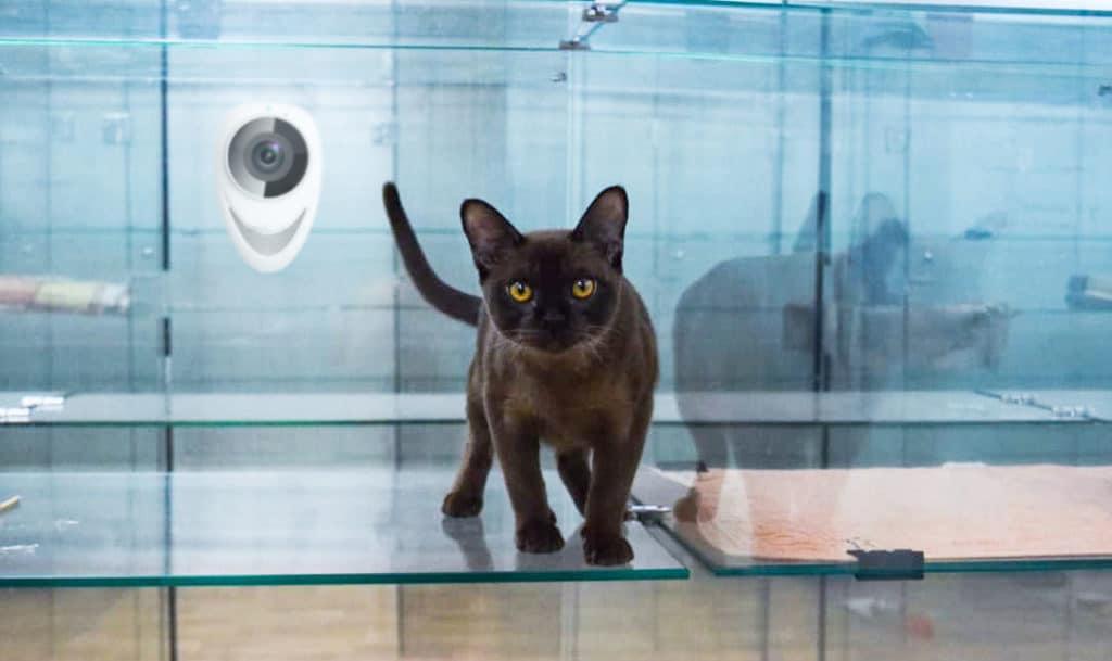 Зоогостиница для кошек в Москве недорого