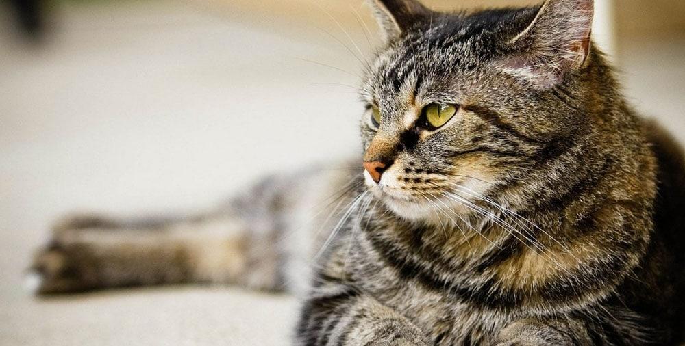 Варианты надежной передержки для кошек в СПб
