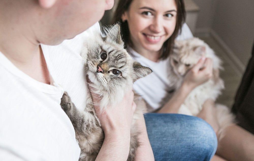 Надежная передержка для кошек в СПб