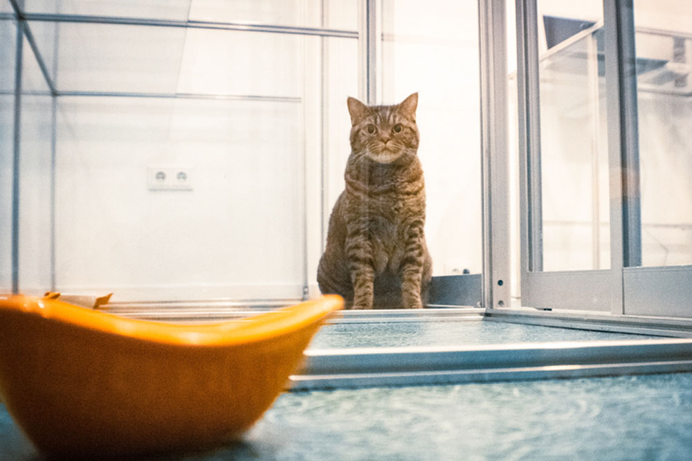 Отдать кошку на передержку
