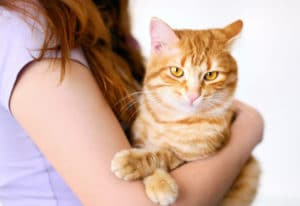 Отзывы о гостинице для кошек в СПб