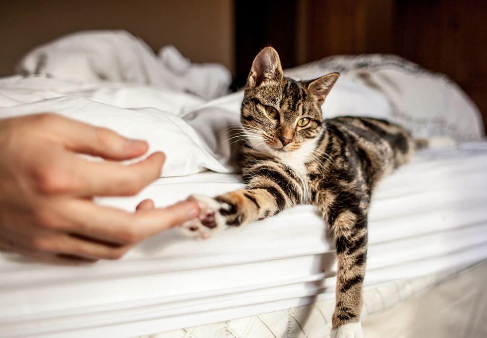 Передержка кошек во Всеволжском районе
