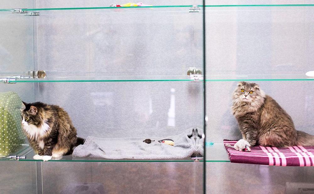Обустройство номера в отеле для кошек в Люберцах