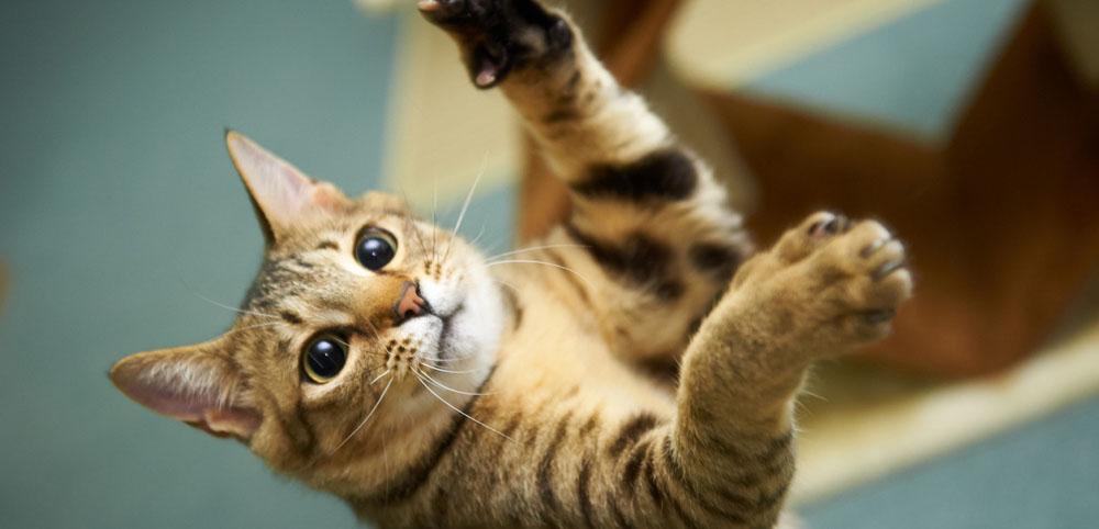 Как выглядит и сколько стоит платная передержка кошек