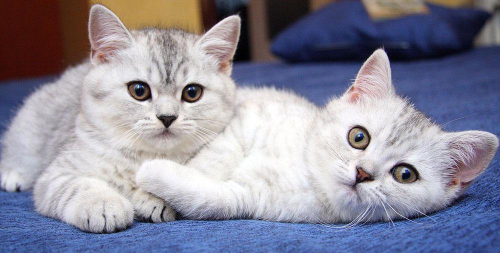 Качественная передержка кошки и сколько она стоит