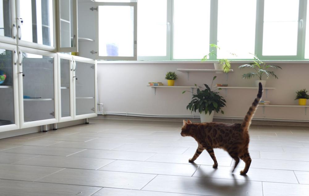Зоогостиницы для животных в Москве