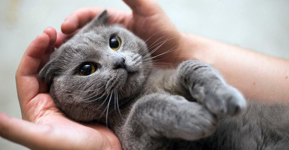 Как выбрать гостиницу для кошек в Невском районе СПб