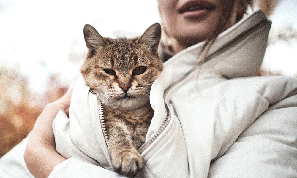 Гостиница для кошек в Невском районе СПб
