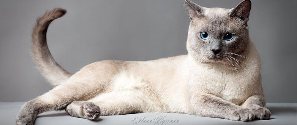 Кому отдать кошку на передержку в СПб