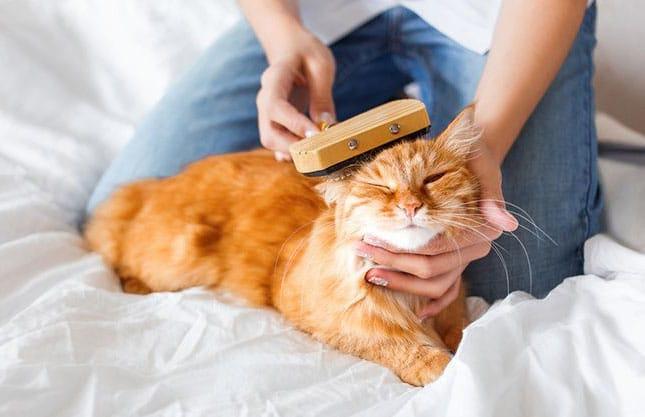 Отдать кошку на передержку в СПб