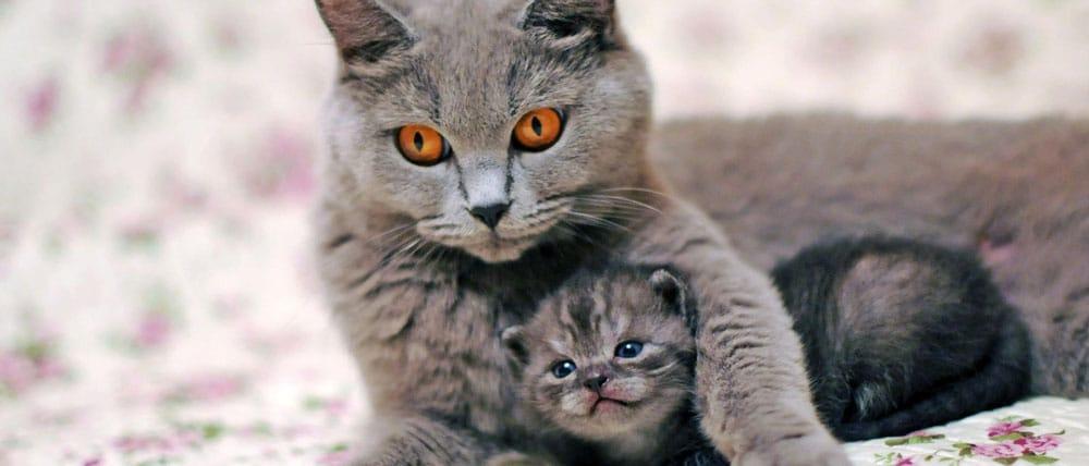 Как организована передержка для кошек в Калининском районе СПб