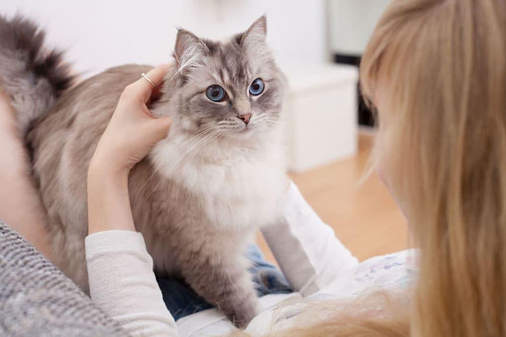 Передержка для кошек в Калининском районе СПб