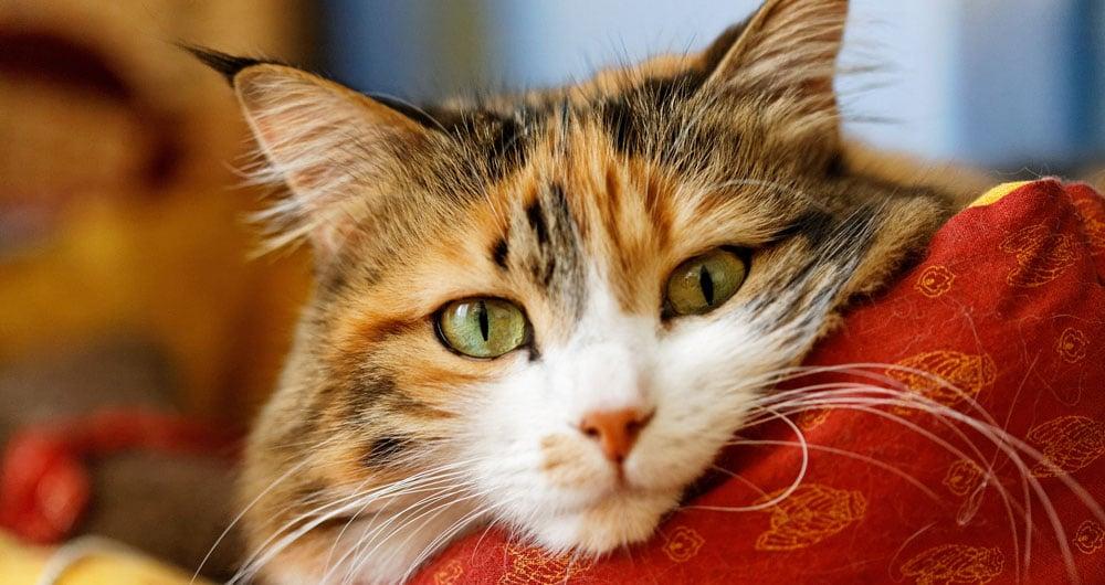 Оптимальный вариант передержки кошки в Приморском районе СПб