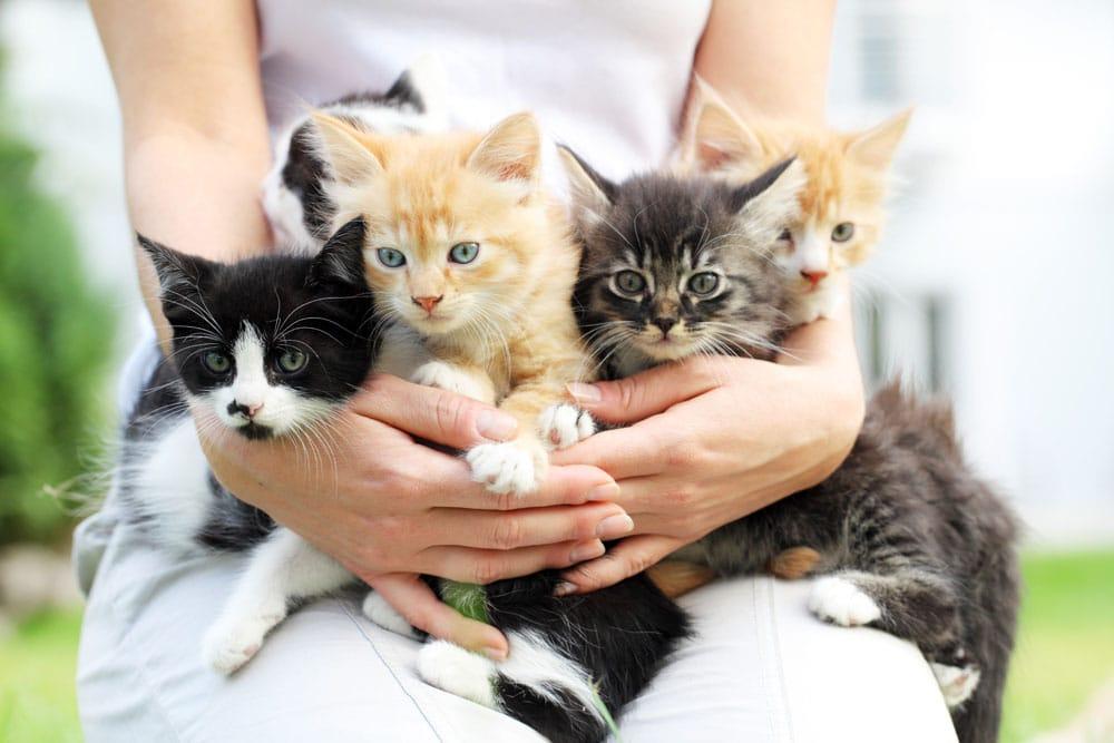Передержка для кошек в Приморском районе СПб