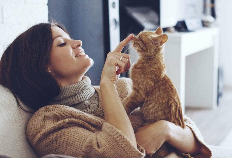 Передержка для кошек во Фрунзенском районе СПб
