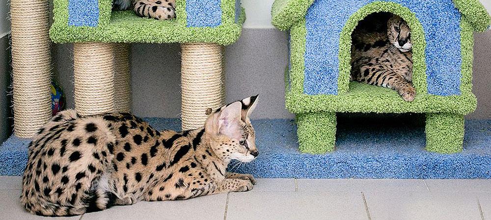 Гостиница для кошек в Москве Тушино