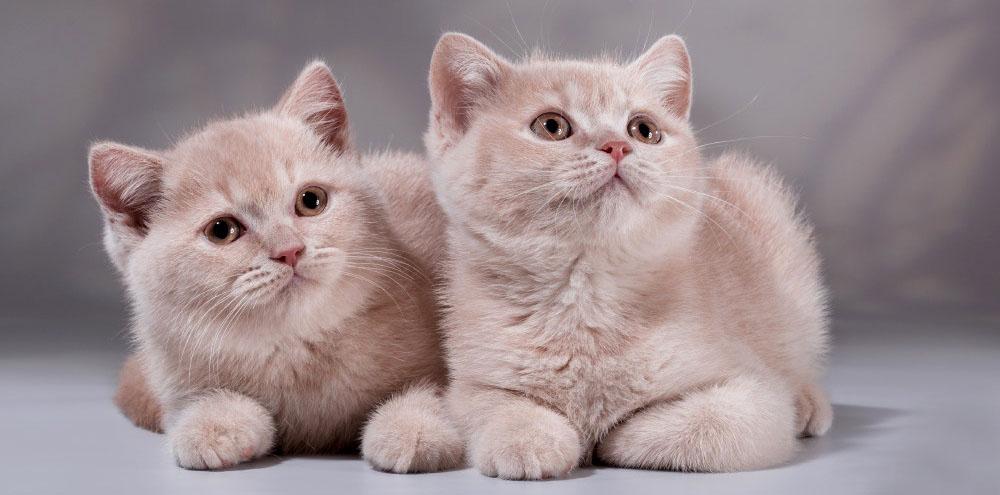 Гостиница для кошек в Москве ВАО
