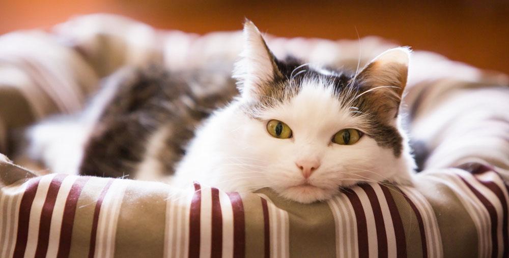 Отель для кошек в Люберцах