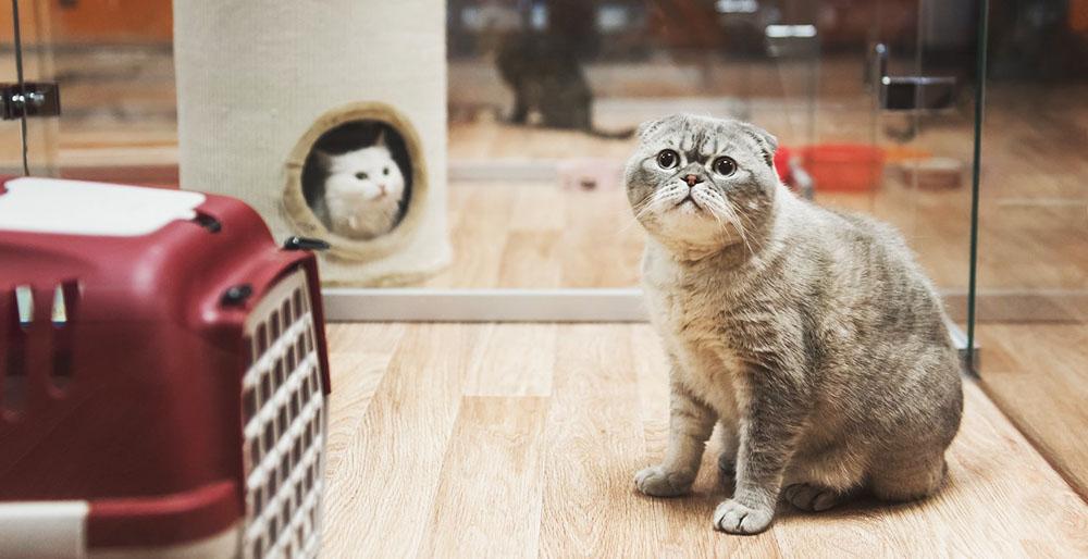 Гостиницы для кошек с большими номерами