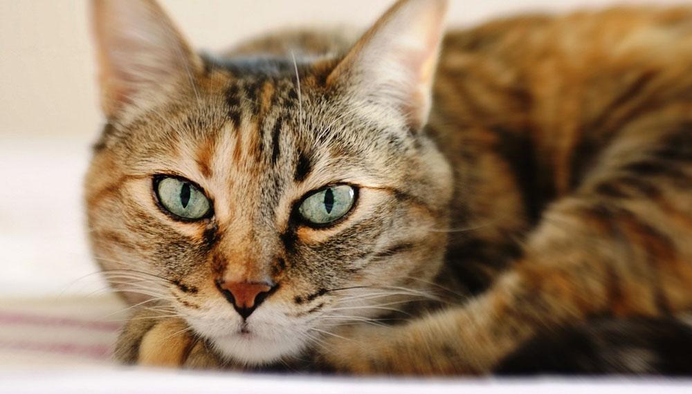 Нужна передержка для кошки