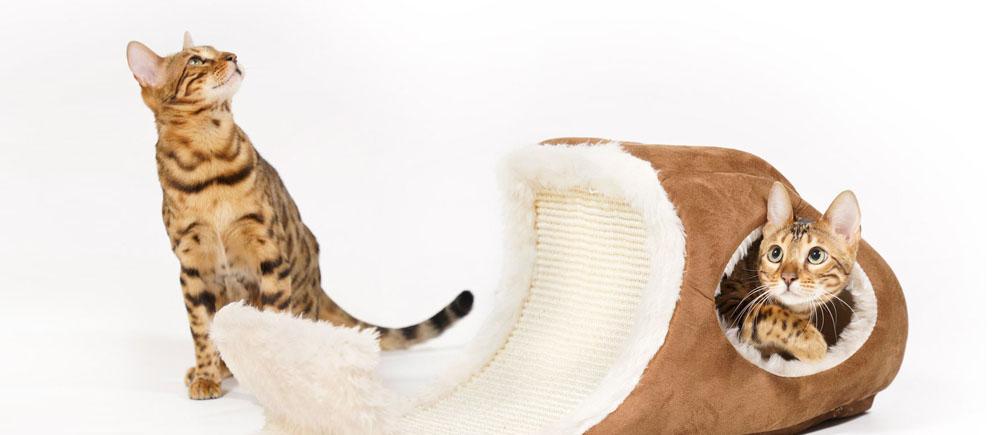 Отзывы о передержке кошек