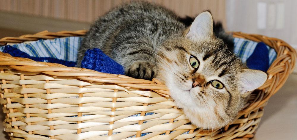 Передержка кошек в Москве в домашних условиях