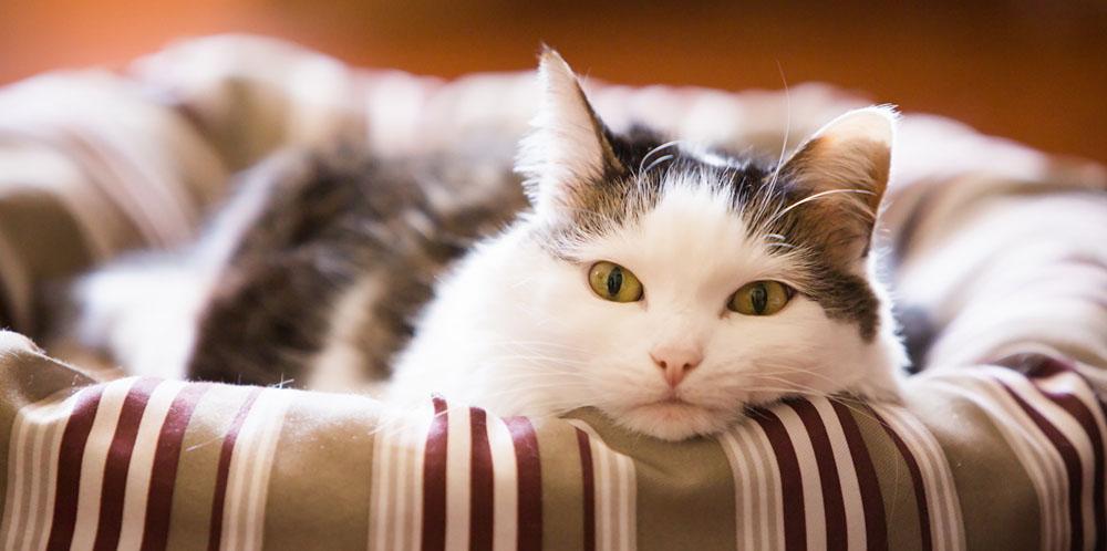 Сколько стоит передержка кошек в сутки
