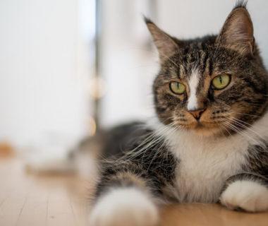 Цены на недорогой отель для кошек в Москве